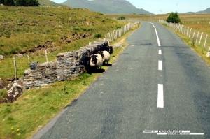 Galway-Kylemore-048
